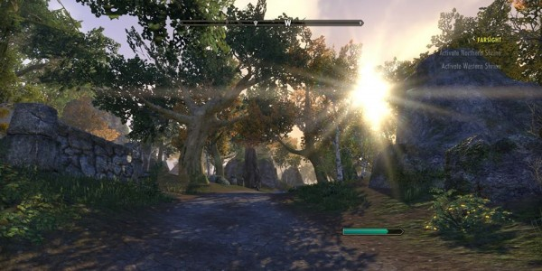 ESO nice forest