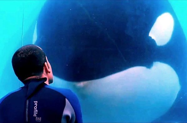 blackfish still